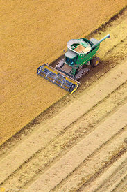 Aerial View of Rice Harvest #40