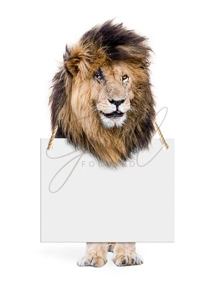 Isolated Lion Wearing Blank Sign