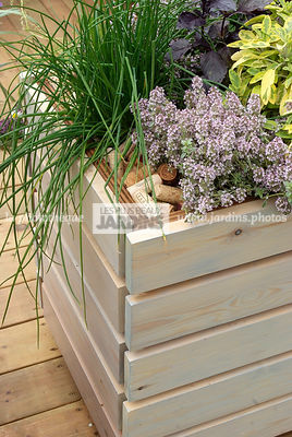 Aromatic plant, Chives, Condiment, Container, Contemporary, garden designer, mulch, Thyme, Window box, Digital