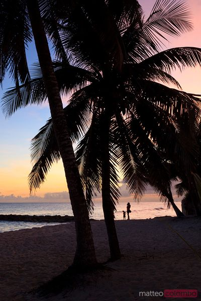 Palms at sunset on tropical beach in the Caribbean