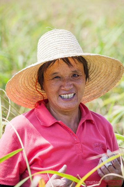 Woman working in rice paddies, Guilin, China