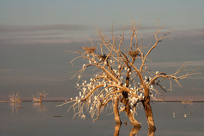 The Cattle Egret Nesting Tree in Evening Light
