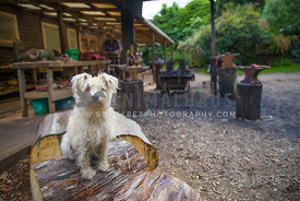 sitting on log at owners workshop