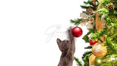 Funny Kitten Batting At Christmas Tree Ornament