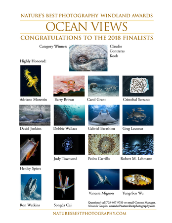 Mention d'honneur au concours Nature Best Photography 2018 Photos sous marines