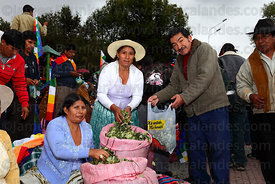 Coca growers distribute coca leaves ( Erythroxylum coca ) at an event promoting traditional uses of the coca leaf , La Paz , ...