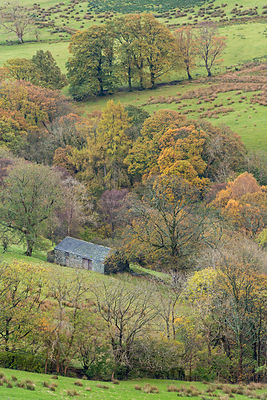 Stone barn surrounded by autumnal trees, Newlands Valley, Lake District National Park, Cumbria, England, UK. November 2013.