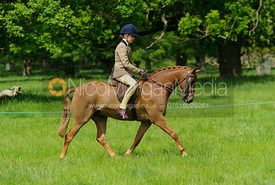 Class 42 - BSPS RIHS Pony of Show Hunter Type >122cms <=133cms