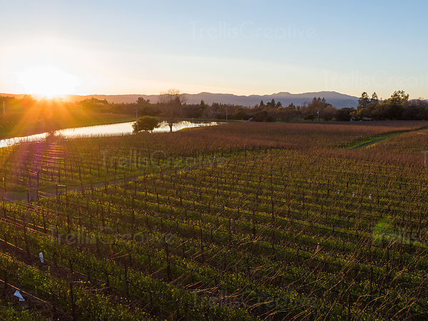 Winter sun at dusk over a resovoir and vineyard