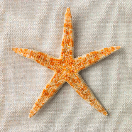 Starfish close-up