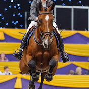 Show Jumper Galleries
