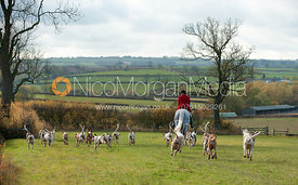 Neil Coleman and the Cottesmore hounds