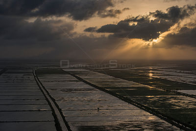 Aerial view of rice production at sunset, east coastal area of Guyana, South America