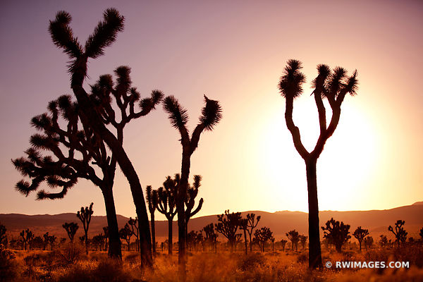 JOSHUA TREE NATIONAL PARK CALIFORNIA AMERICAN SOUTHWEST DESERT LANDSCAPE