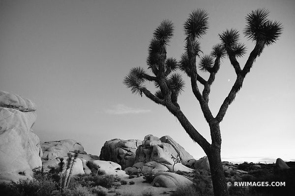 JUMBO ROCKS JOSHUA TREE NATIONAL PARK BLACK AND SOUTHWEST LANDSCAPE