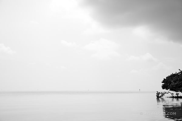 MANGROVE AND CALM OCEAN ANNE'S BEACH ISLAMORADA LOWER MATECUMBE KEY FLORIDA KEYS BLACK AND WHITE