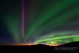 Streak of Purple | Denali National Park