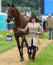 Lynn Symansky and DONNER at the trot up, Land Rover Burghley Horse Trials 2017
