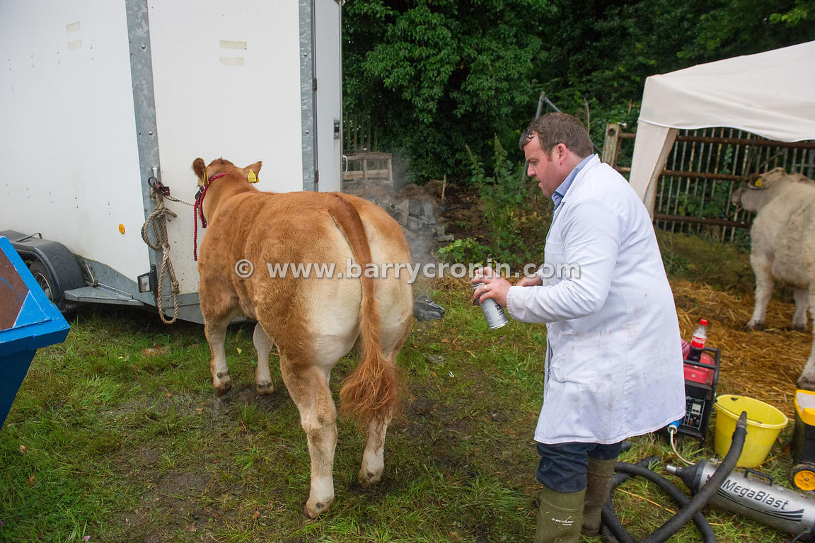 19th August, 2015.The 74th Virginia Agricultural Show, Virginia, County Cavan. Pictured is Carl OConnell putting finishing to...