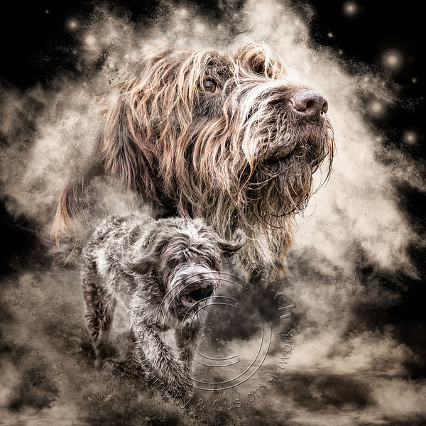 Art-Digital-Alain-Thimmesch-Chien-71