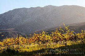 Vinyard on mountain slope