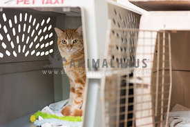 cat hiding in crate at shelter