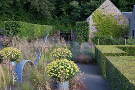 Argyranthemum Jamaica Primrose in planters, sculpture, ornamental grasses and clipped hedging