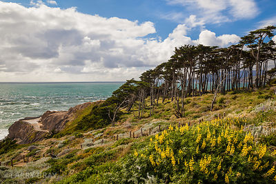 View at Point Lobos with yellow flowers in the foreground, San Francisco, USA