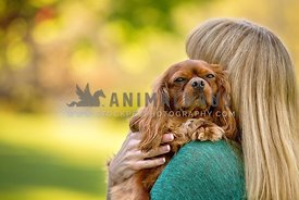 small dog resting on woman's shoulder
