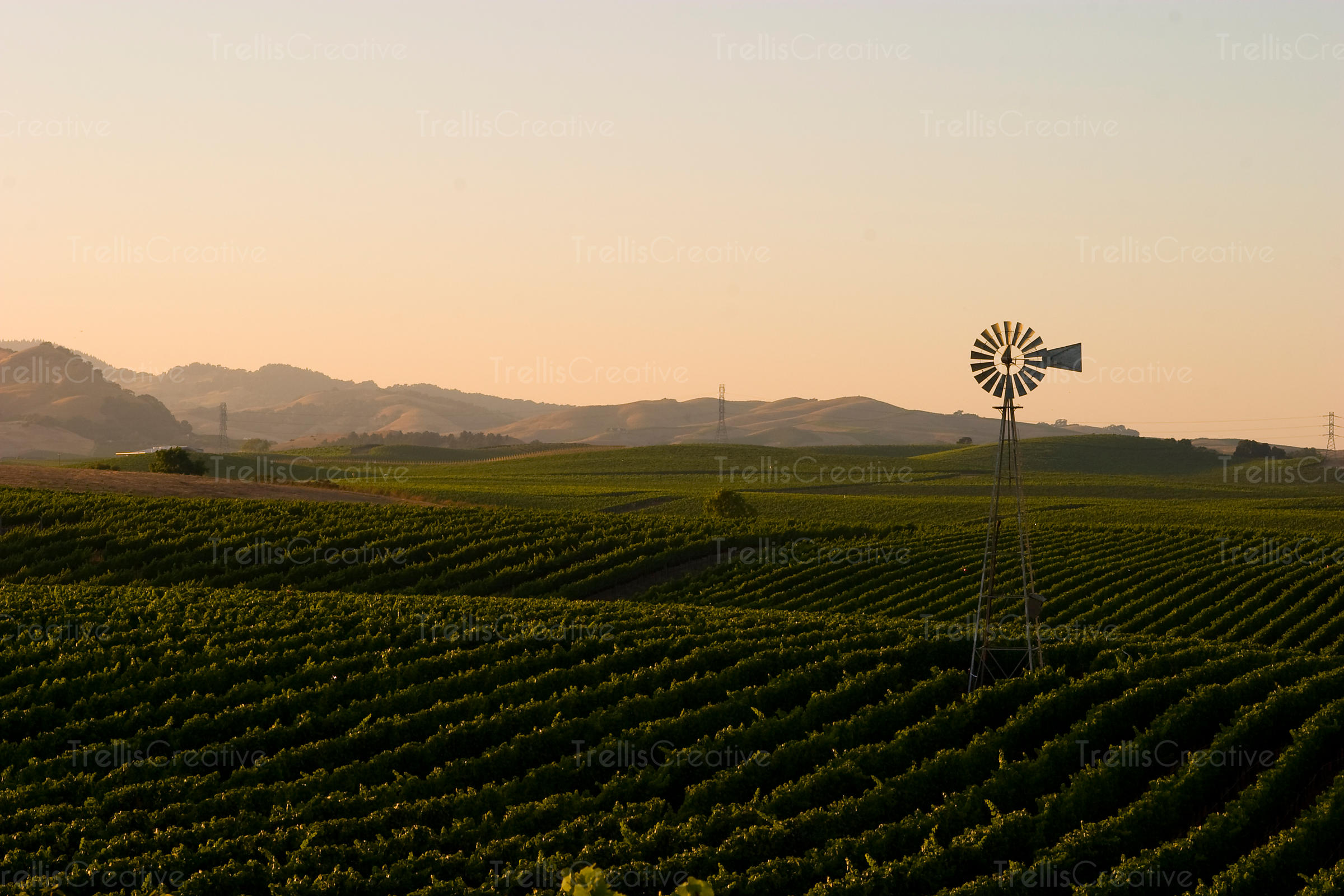 Windmill amidst the rolling hills in Carneros, Napa Valley