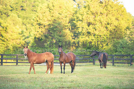 3 horses in their pasture