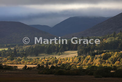 The beauty of Badenoch, Scottish Highlands, with autumnal birch colour, conifers and Monadhliath Mountains behind