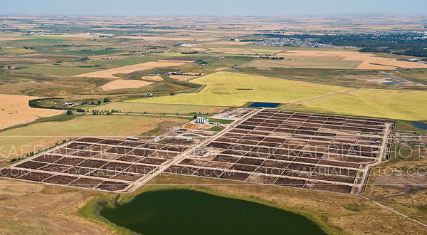 Cattle Feedlot, Alberta