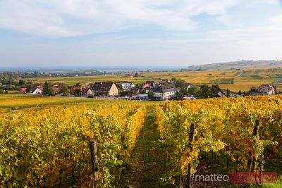 Vineyards and village in autumn, Alsace, France