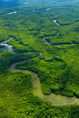 Aerial view of Delta Sierpe River Terraba, Corcovado National Park, Osa Peninsula, Puntarenas Province, Costa Rica. December ...