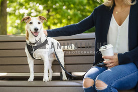 Woman having a coffee in the park with her dog
