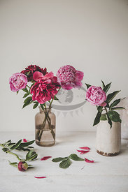Paeonies by Gabler