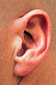 Human outer ear