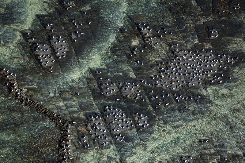 Aerial photo of Terns nesting amongst traditional stone fish traps, Cape Agulhas, Southern Cape, South Africa, August 2009