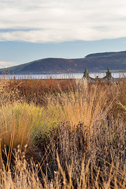 Mixed grasses and seedheads; Loch Leven and Lomond Hills beyond