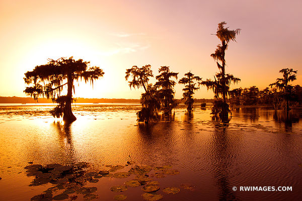 LAKE MARTIN ATCHAFALAYA BASIN LOUISIANA SWAMP LANDSCAPE SUNSET