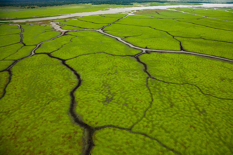 Aerial view of channels on the floodplain of Gorongosa National Park, Mozambique. July 2014