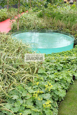 Contemporary garden, Lady's mantle, Perennial, Pool, Digital, Grasses