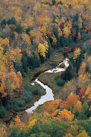 Aeriel view of river in Sugar maple forest {Acer saccharum} Michigan, USA