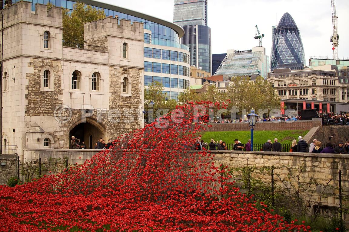 THE WAVE of Poppies flowing over the Entrance way to The Tower of London