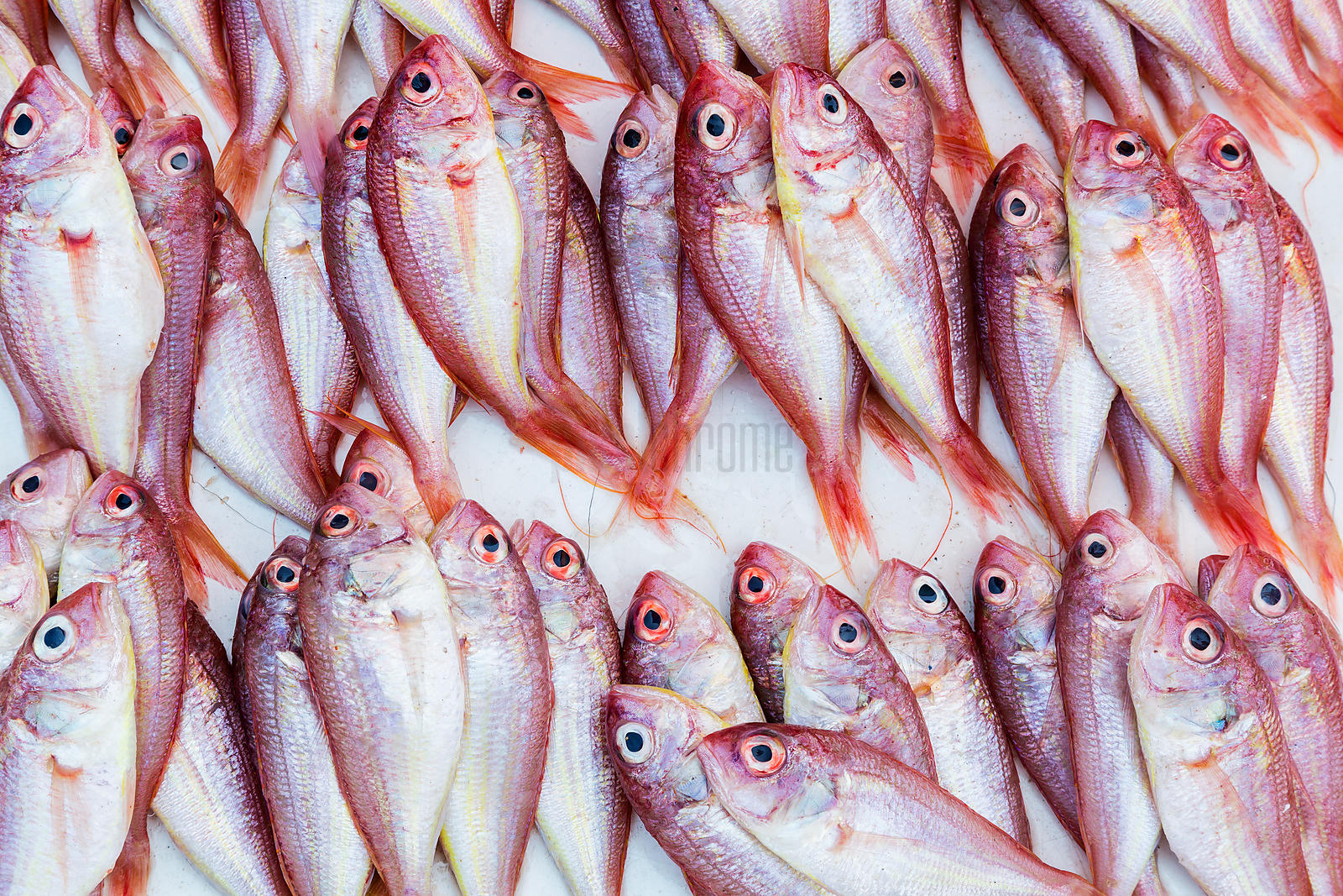 Close up of fresh fish for sale