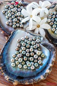 Famous black pearls of Tahiti, Rangiroa, French Polynesia