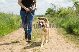 husky dog being walked on lead up a path with human legs in photo