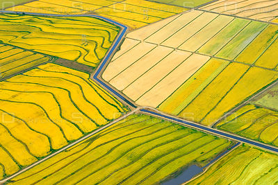 Rice Paddies Agriculture Sacamento Valley California