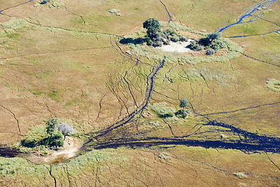 Aerial view of the Okavango delta with channels, swamps and islands, Botswana, Africa